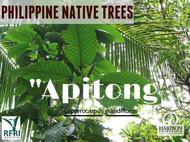 Apitong_LSU,Baybay Leyte_rolly 173
