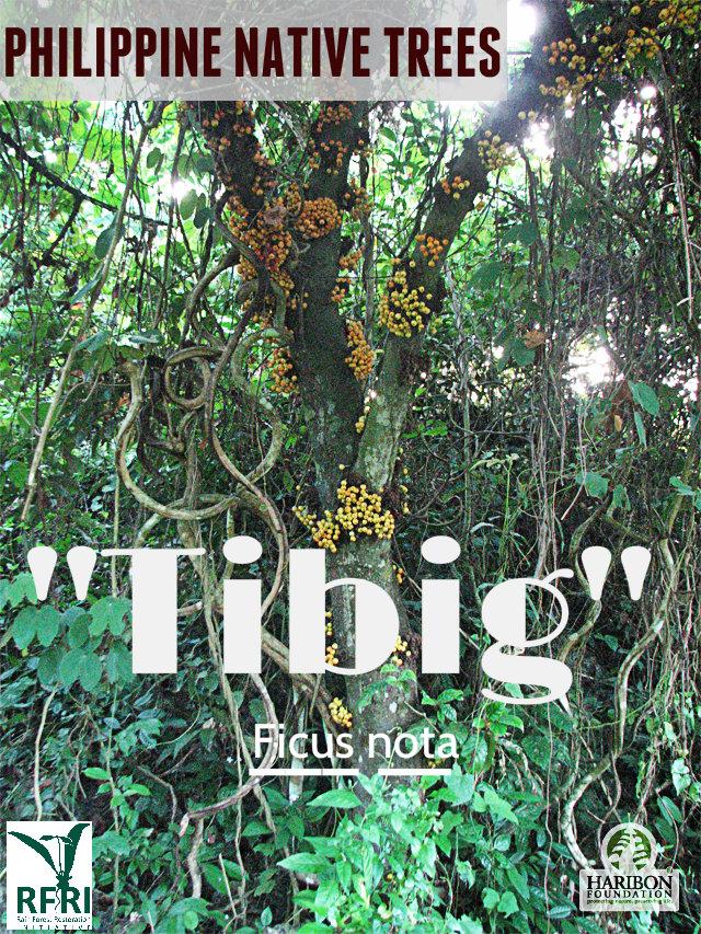 Tibig_Camotes Is