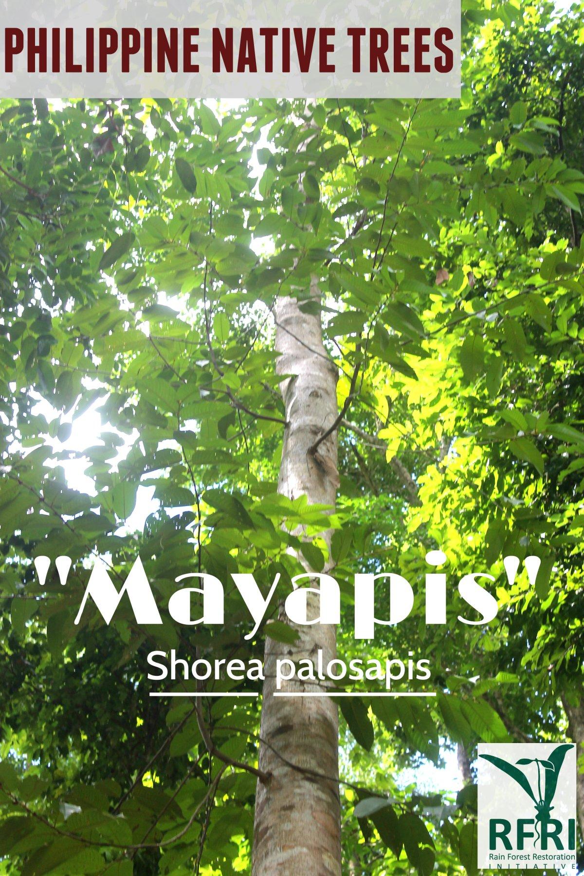 mayapis