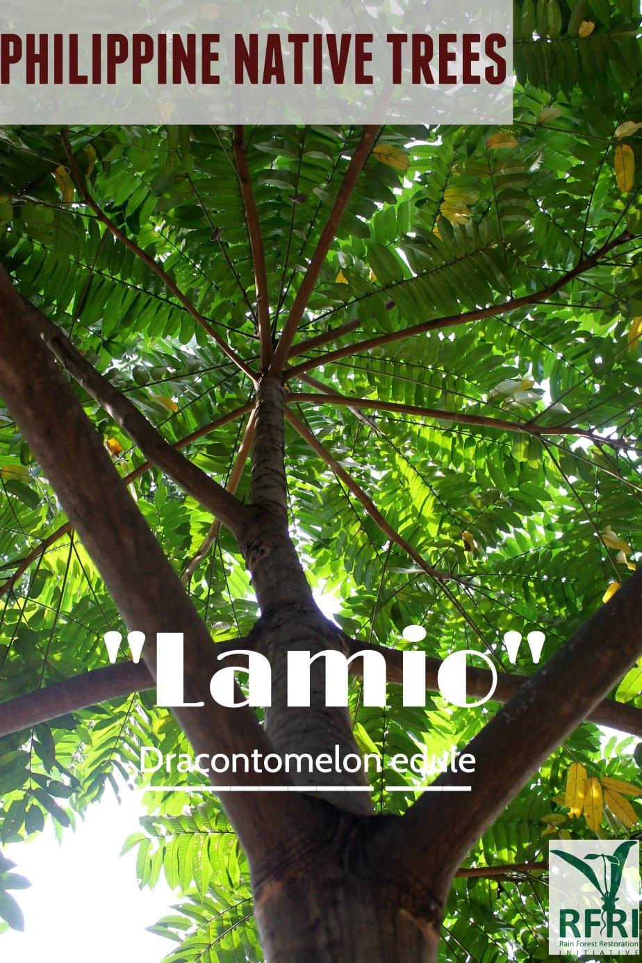 Lamio